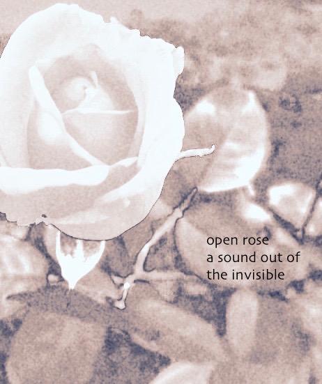 DT Rose